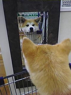 鏡に写っているのは?